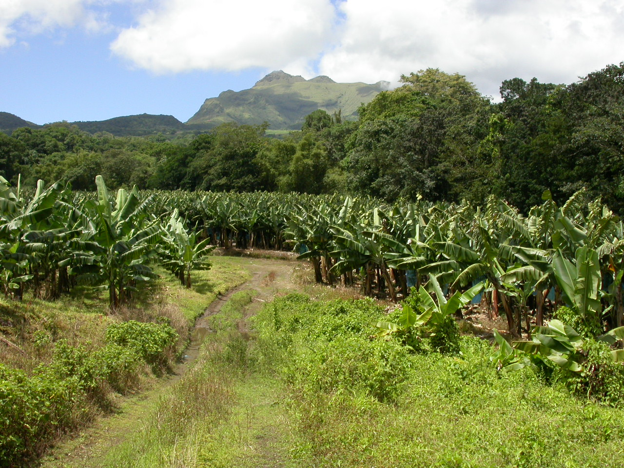 Agriculture guyane